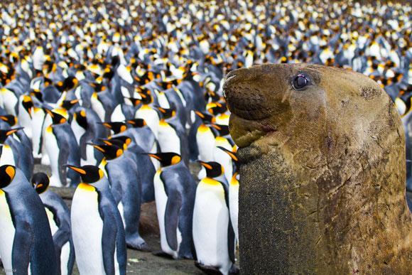 Polar-wildlife1.jpg
