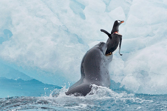 Polar-wildlife2.jpg